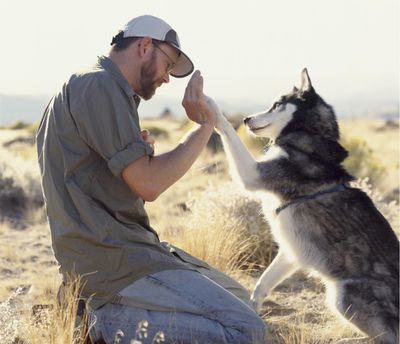 Animal trainer and dog sharing a high-five.
