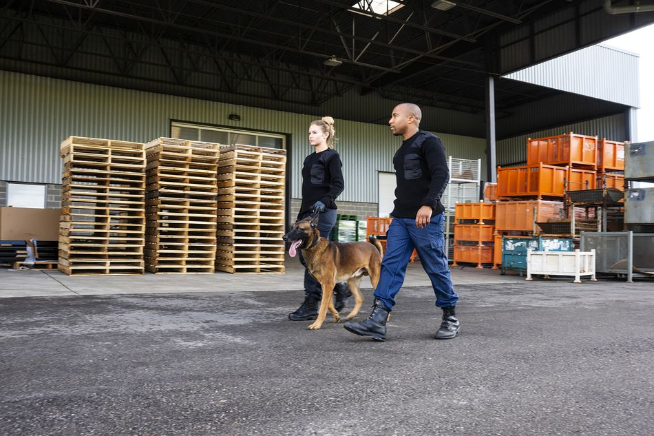 Two K-9 Security Officers With a Belgian Malinois on Patrol