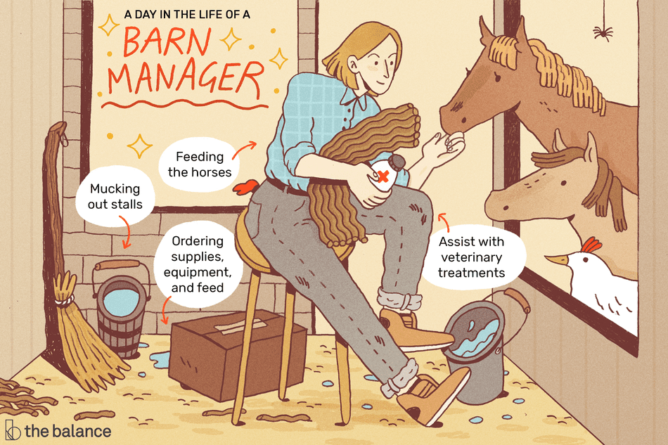 A day in the life of a barn manager: Mucking out stalls; feeding horses; ordering supplies, equipment and feed; assist with veterinary treatments