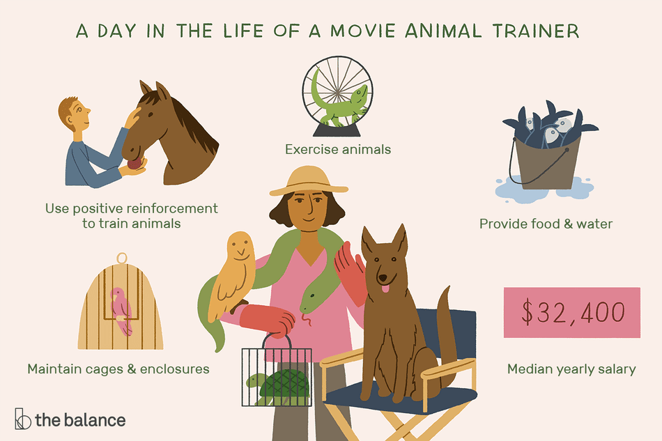 A Day in the Life of a Movie Animal Trainer