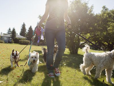 Teenage girl walking several dogs in sunny park