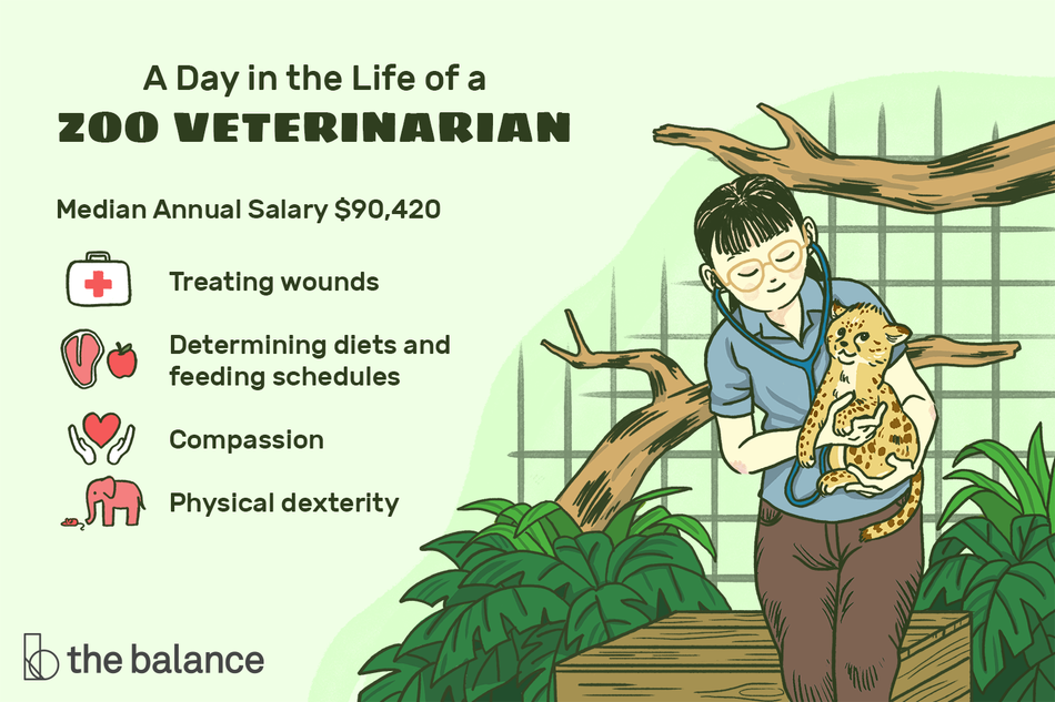 "Image shows a woman in a zoo enclosure wearing a stethoscope and holding a baby cheetah. Text reads: ""A day in the life of a zoo veterinarian: median annual salary = $90,420, treating wounds, determining diets and feeding schedules, compassion, physical dexterity"""