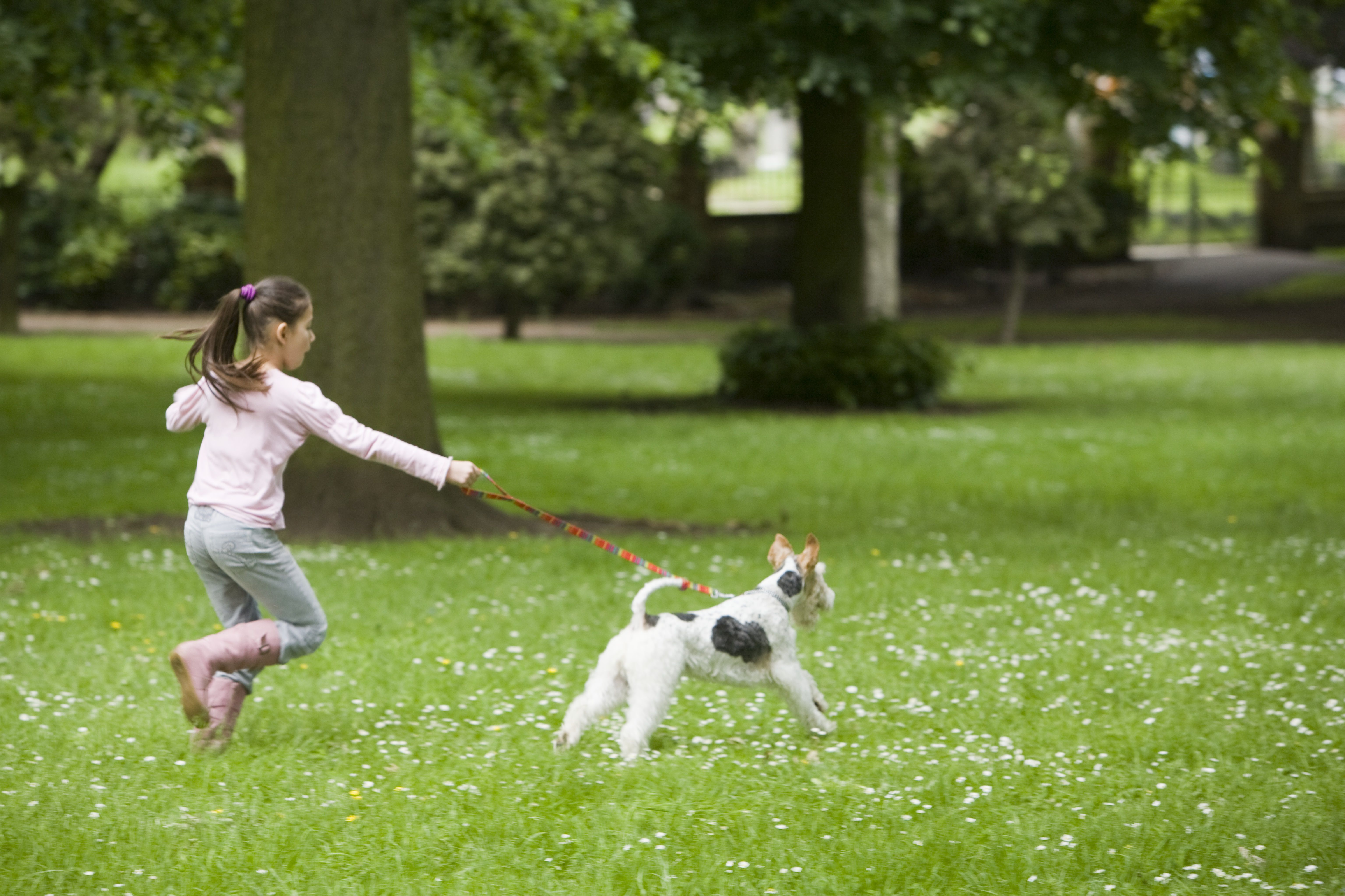 Girl Running with Leashed Wire Fox Terrier