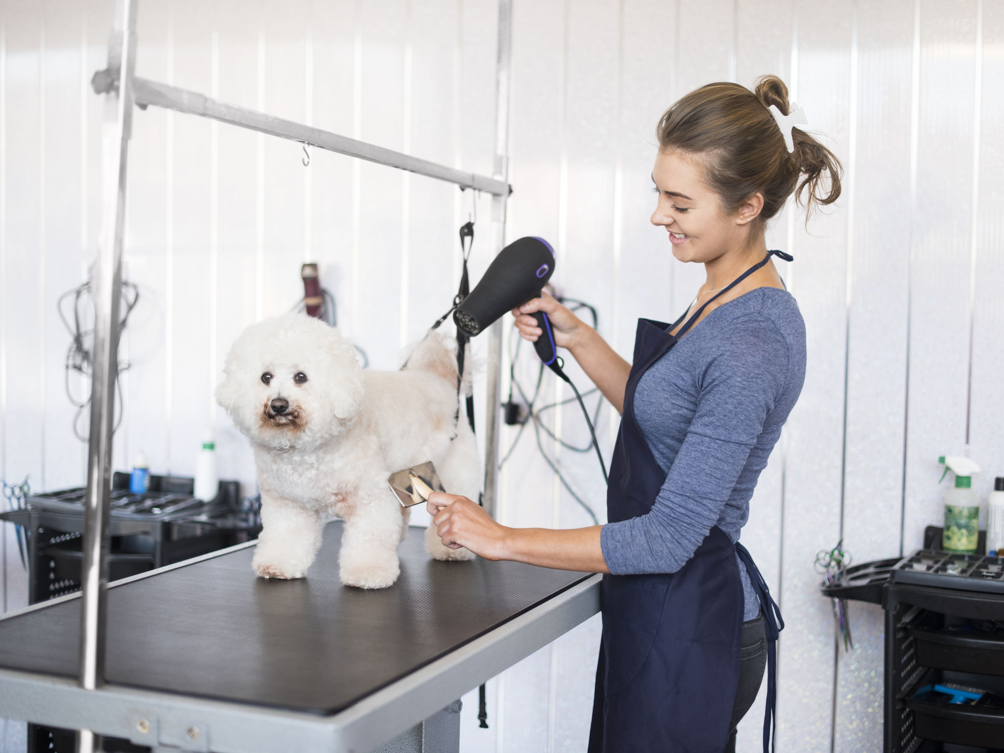 How to Start a Mobile Dog Grooming Salon