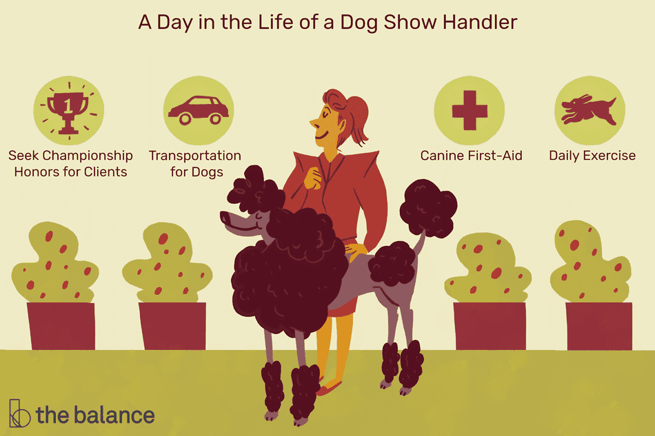 A day in the life of a dog show handler: See championship honors for clients, transportation for dogs, canine first-aid, daily exercise