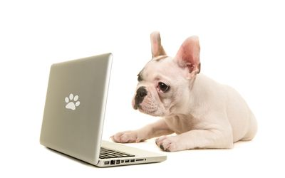 1f2f0faae58 A Guide to Online Pet Stores: Tips You'll Want to Know