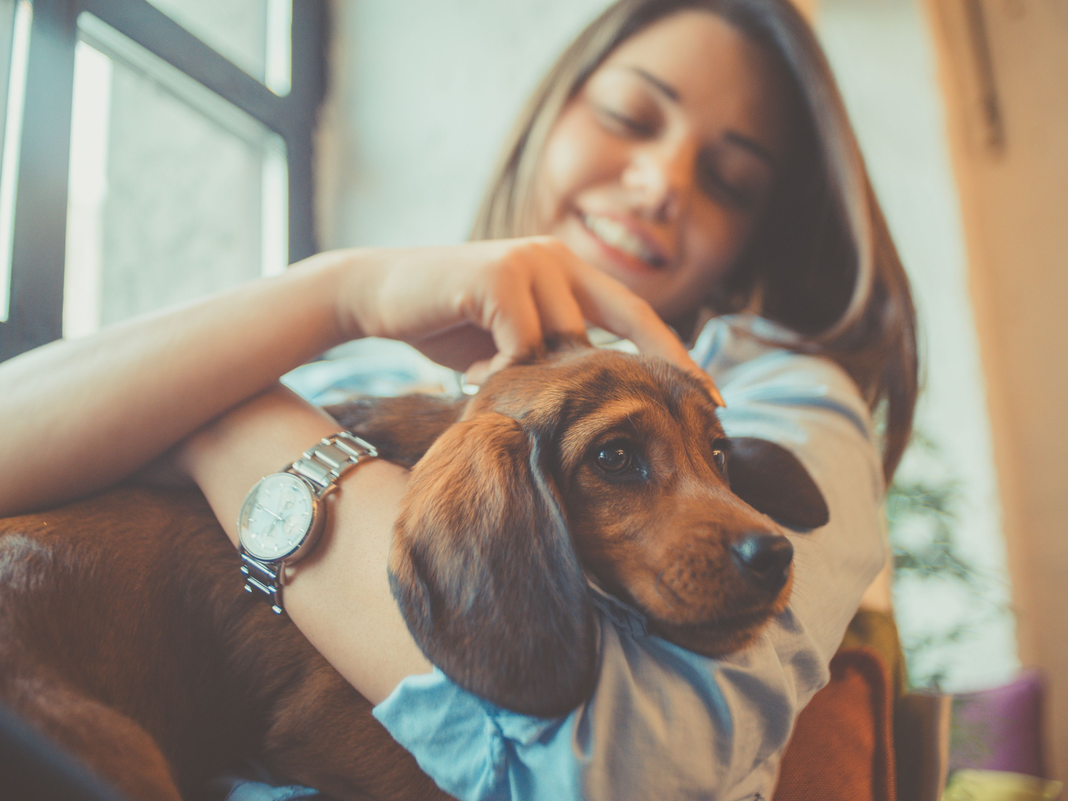 Learn Where to Find Canine Internships
