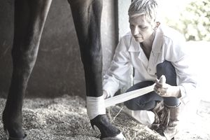 Veterinarian bandaging leg of a horse
