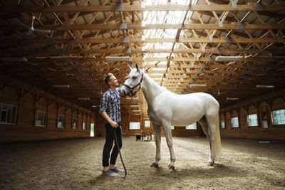 Side view of rancher stroking white horse in stable