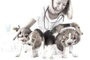 Young Female Veterinarian Embracing Cute Little Puppies