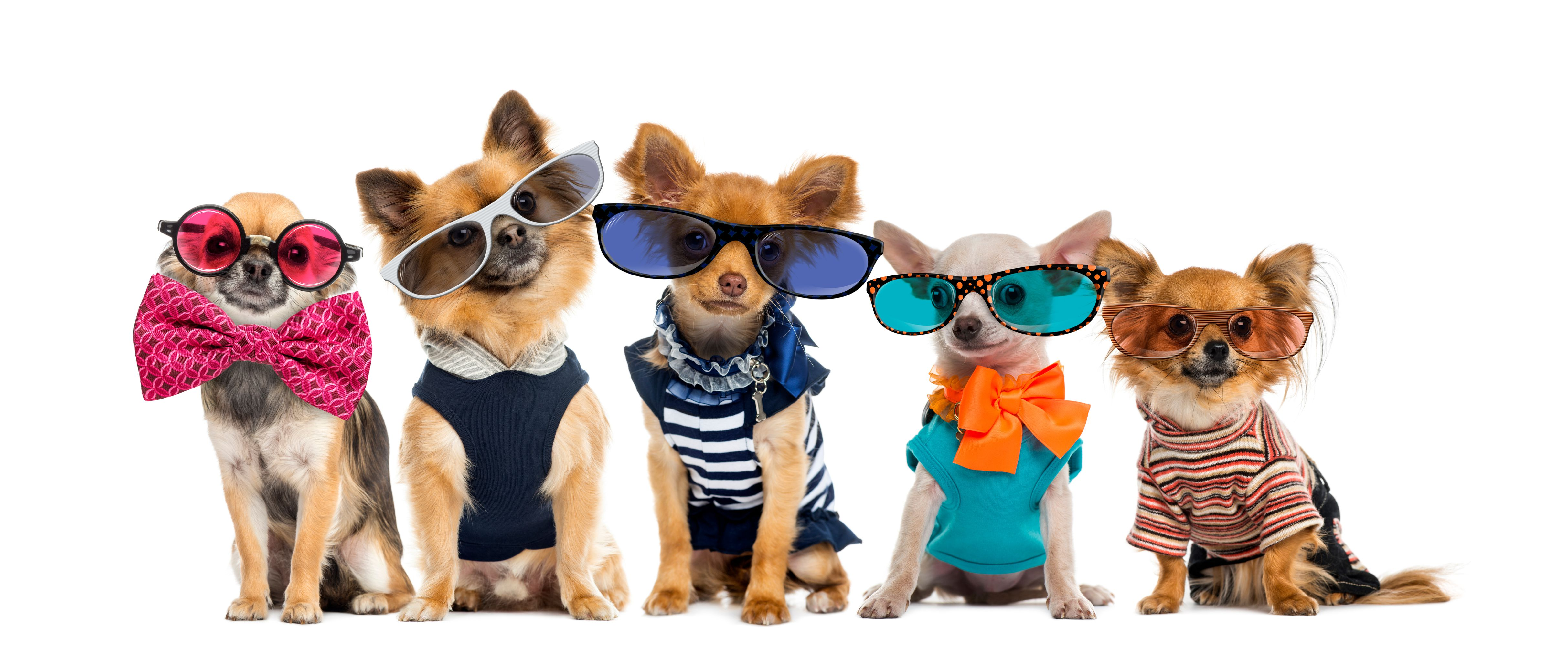 Learn How to Increase Sales in a Pet Shop
