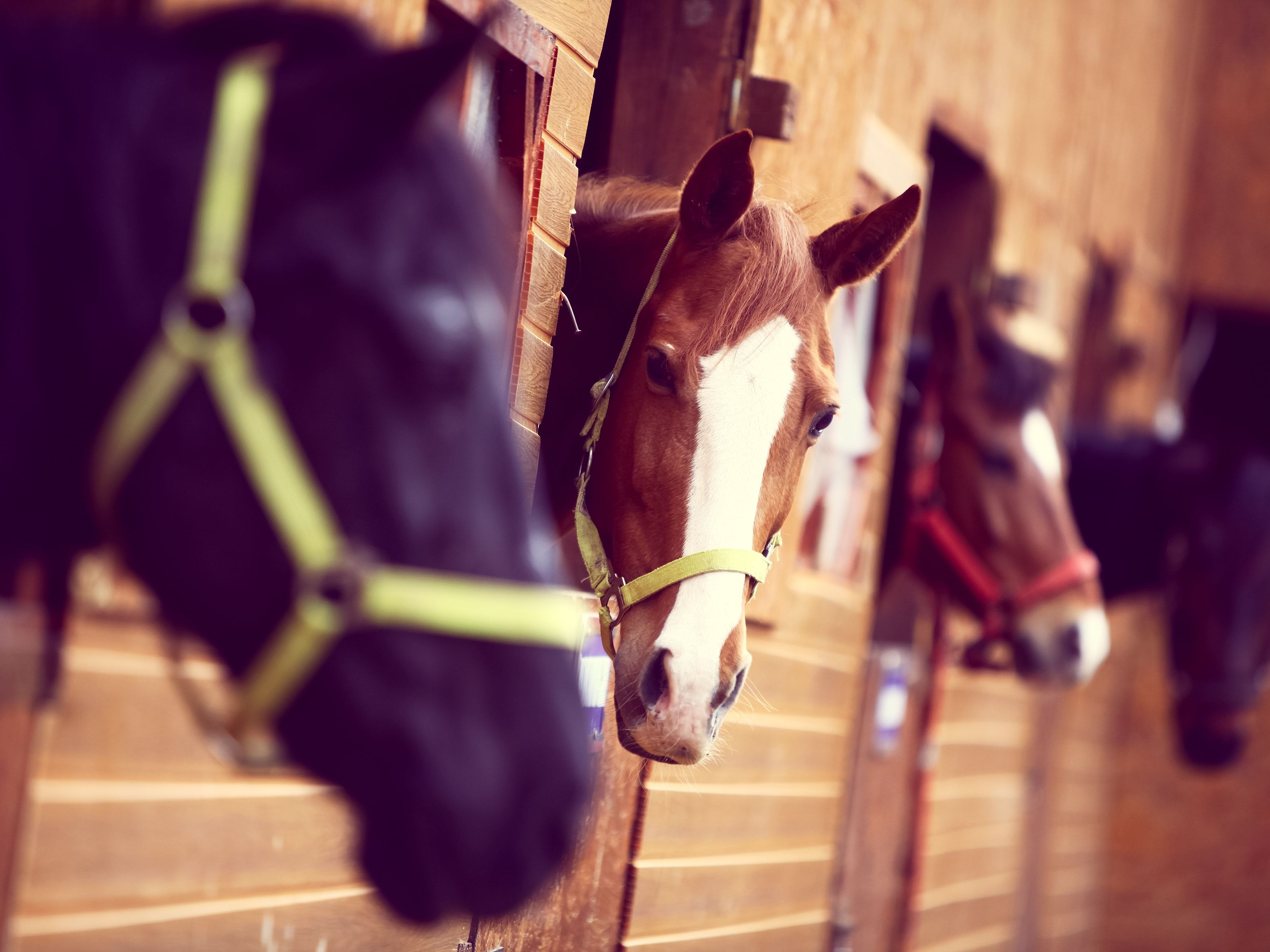 Learn How to Start a Horse Boarding Business