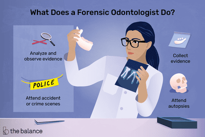 What does a forensic odontologist do? Collect evidence, analyze and observe evidence, attend accident or crime scenes, attend autopsies
