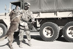 U.S. Navy Police Dogs And Their Handlers Deployed To Kuwait