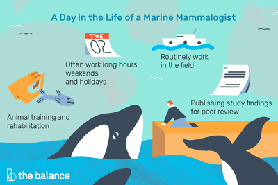 A Day in the Life of a Marine Mammalogist