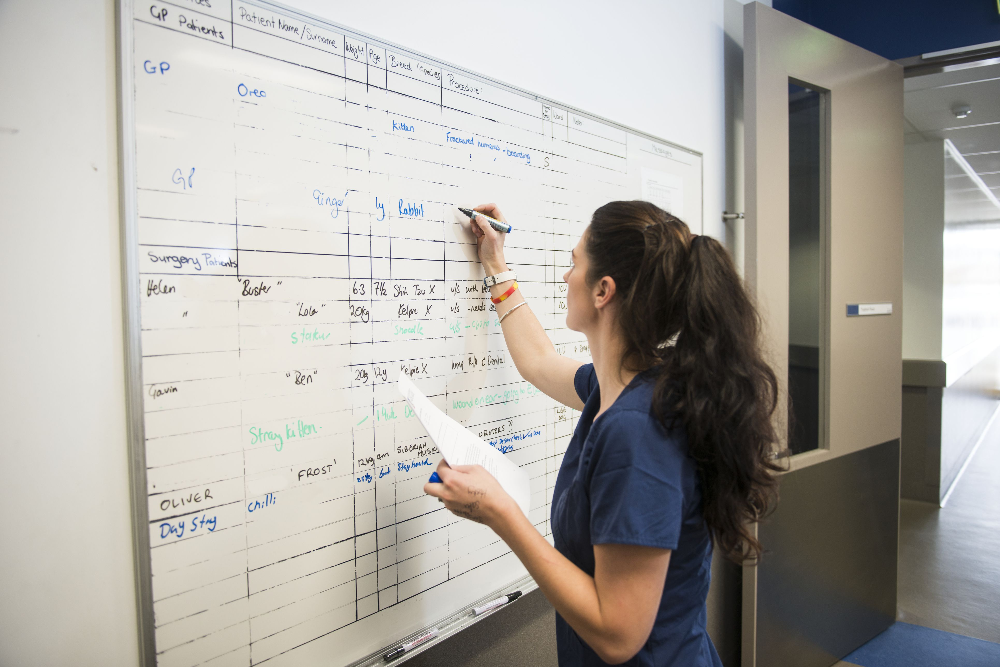 A nurse writing a weekly work schedule on a whiteboard.