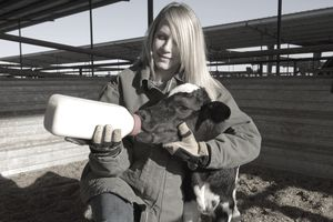 Farm worker bottle feeding a newborn calf at a dia