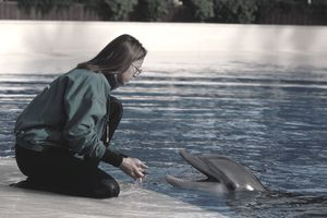 Dolphin with a trainer