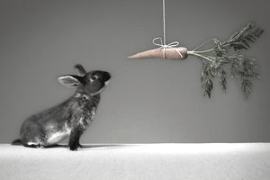 Rabbit looking at a carrot
