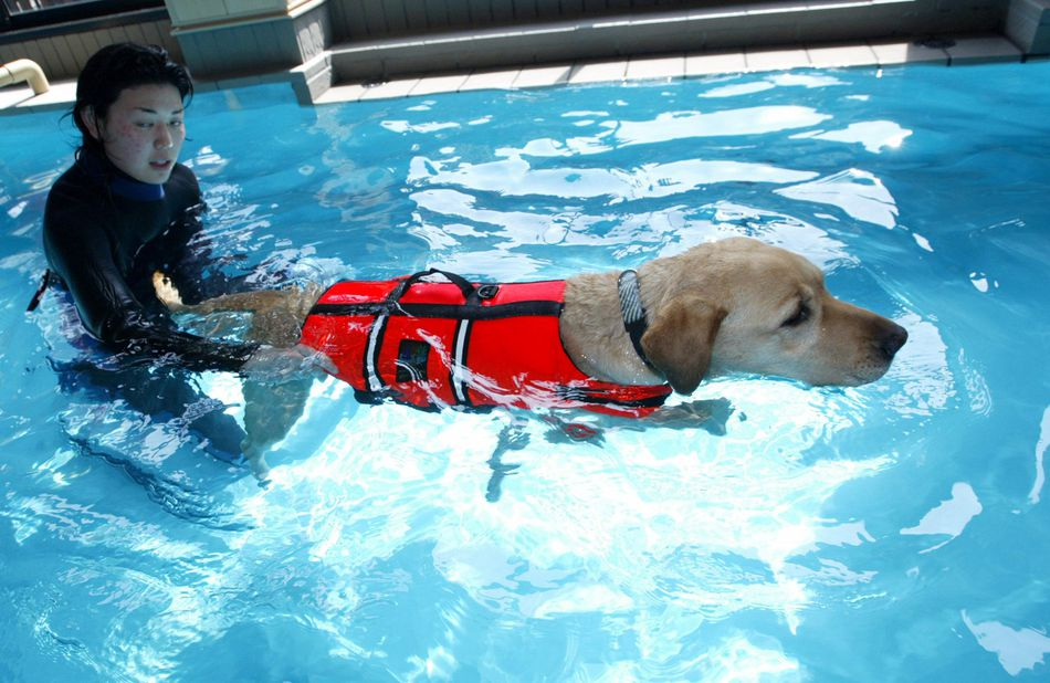 A dog receives swimming therapy at the Oedo Resort and Spa May 4, 2004 in Tokyo, Japan.