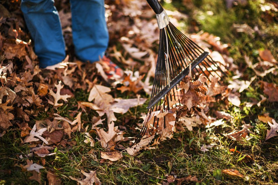 Boy raking autumn leaves