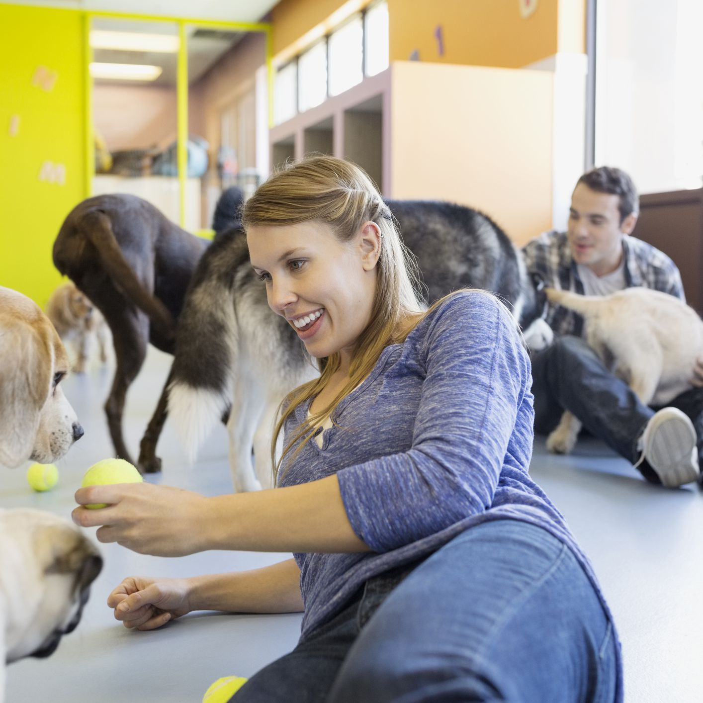 A Step-By-Step Guide to Starting a Pet Business