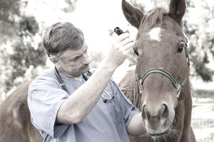 Veterinarian during medical exam of a horse