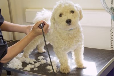 Pet product trade shows you need to attend follow these steps to start a successful mobile pet grooming business solutioingenieria Image collections