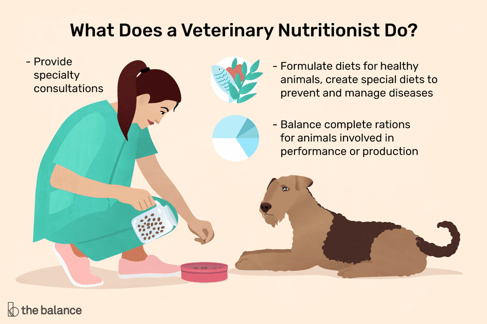 What does a veterinary nutritionist do? Provide specialty consultations, formulate diets for health animals, create special diets to prevent and manage diseases, balance complete rations for animals involved in performance or production