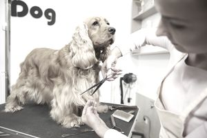Learn how to become a pet groomer solutioingenieria Gallery