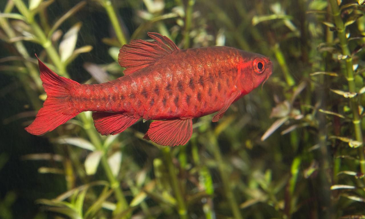 The Best Pet Fish For Beginners