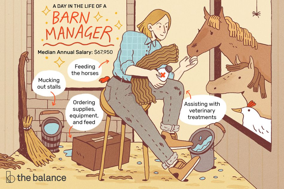 "Image shows a woman in a barn feeding a horse, a donkey, and a rooster. She is sitting on a stool. On the floor around her are buckets of water, a box of feed, and a broom. Text reads: ""A day in the life of a barn manager: mucking out stalls, feeding the horses, ordering supplies, equipment, and feed. assisting with veterinary treatments, median annual salary: $67,950"""