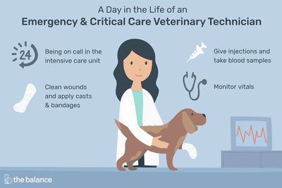 A day in the life of an emergency and critical care veterinary technician: Being on call in the intensive care unit; clean wounds and apply casts and bandages; give injections and take blood samples; monitor vitals