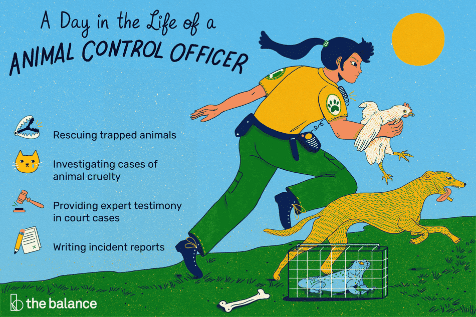 a day in the life of a animal control officer