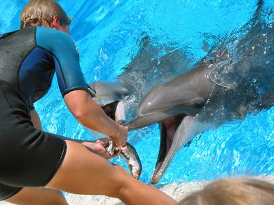 a man in a wet suit feeding dolphins
