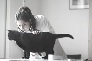 Veterinarian examining black cat
