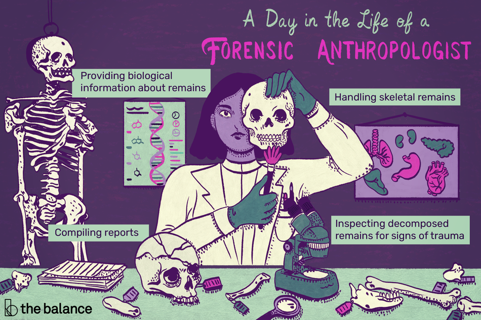 a day in the life of a forensic anthropologist