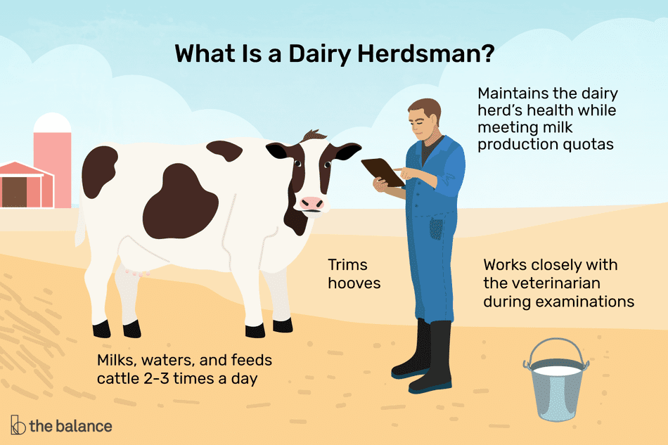 What is a dairy herdsman? Milks, waters and feeds cattle 2-3 times a day, trims hooves, maintains the dairy herd's health while meeting milk production quotas, works closely with the veterinarian during examinations