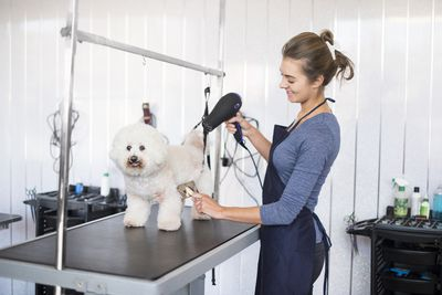 How to start a dog grooming business here are some helpful tips on how to start a mobile dog grooming salon solutioingenieria Choice Image
