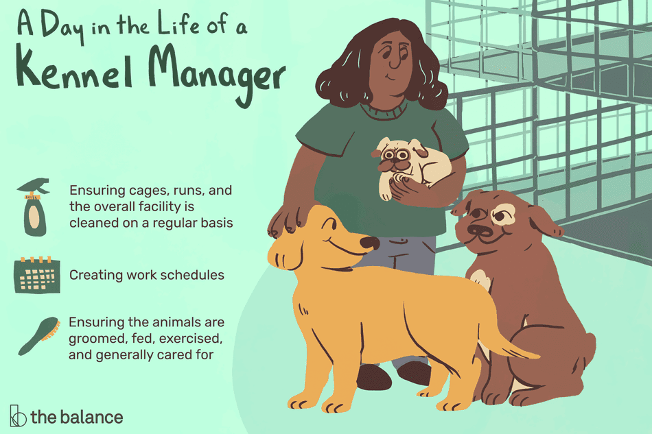 A day in the life of a kennel manager: Ensuring cages, runs and overall facility is cleaned on a regular basis, creating work schedules, ensuring the animals are groomed, fed, exercised and generally cared for
