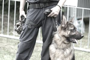 Security guard with German Shepherd dog