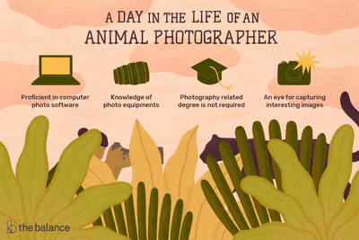 What Does An Animal Photographer Do