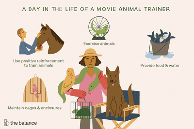 A day in the life of a movie animal trainer: Use positive reinforcement to train animals, exercise animals, provide food and water, maintain cages and enclosures