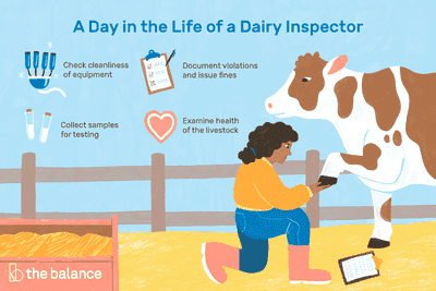 A day in the life of a dairy inspector: Check cleanliness of equipment, document violations and issue fines, collect samples for testing, examine health of the livestock