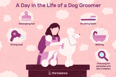 A day in the life of a dog groomer: Bathing, detangling hair, drying coat, brushing teeth, checking for parasites and skin irritation