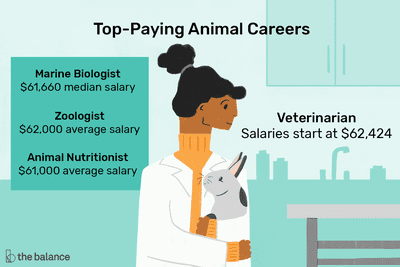 Illustration of top-paying animal careers