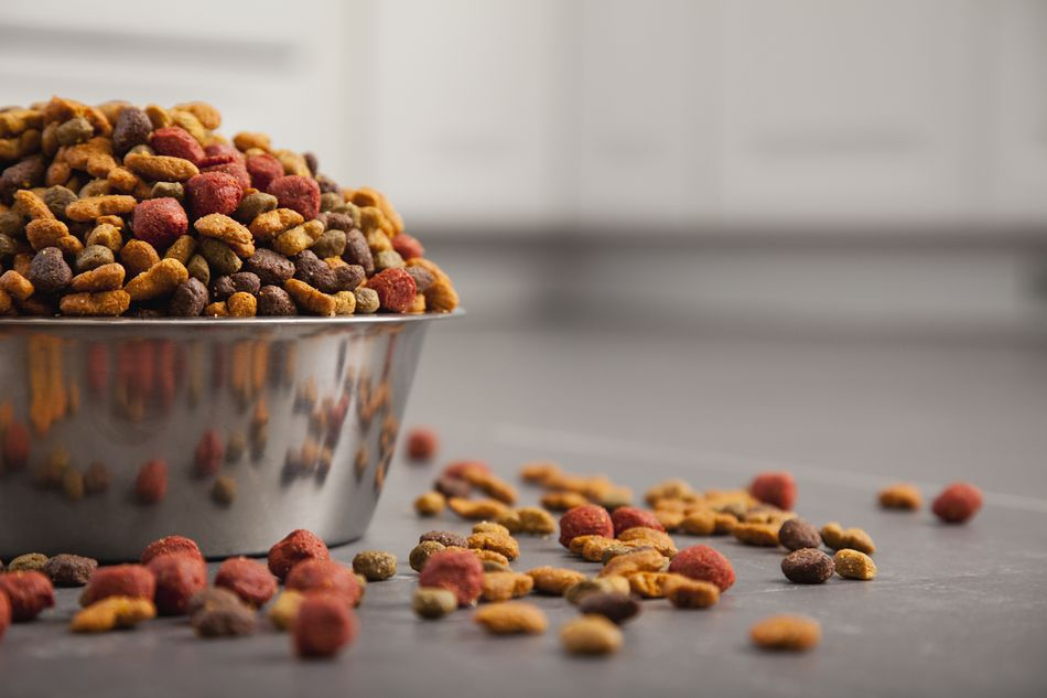 Close-up of bowl full of dog food