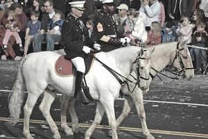 Marine Mounted Color Guard