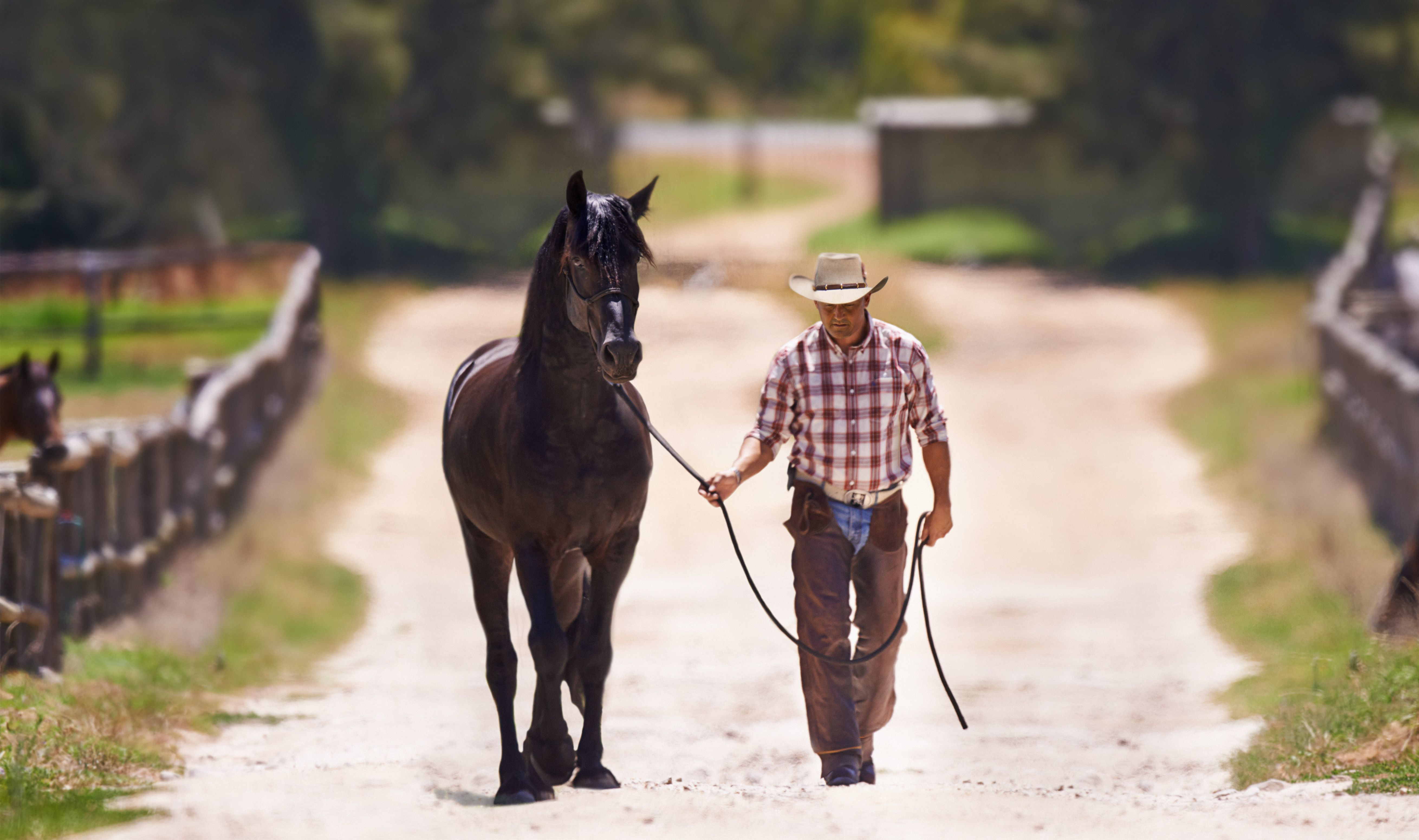 Animal Trainer and Horse