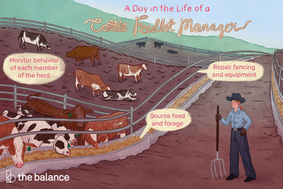 A day in the life of a cattle feedlot manager: Monitor behavior of each member of the heard; repair fencing and equipment; source feed and forage